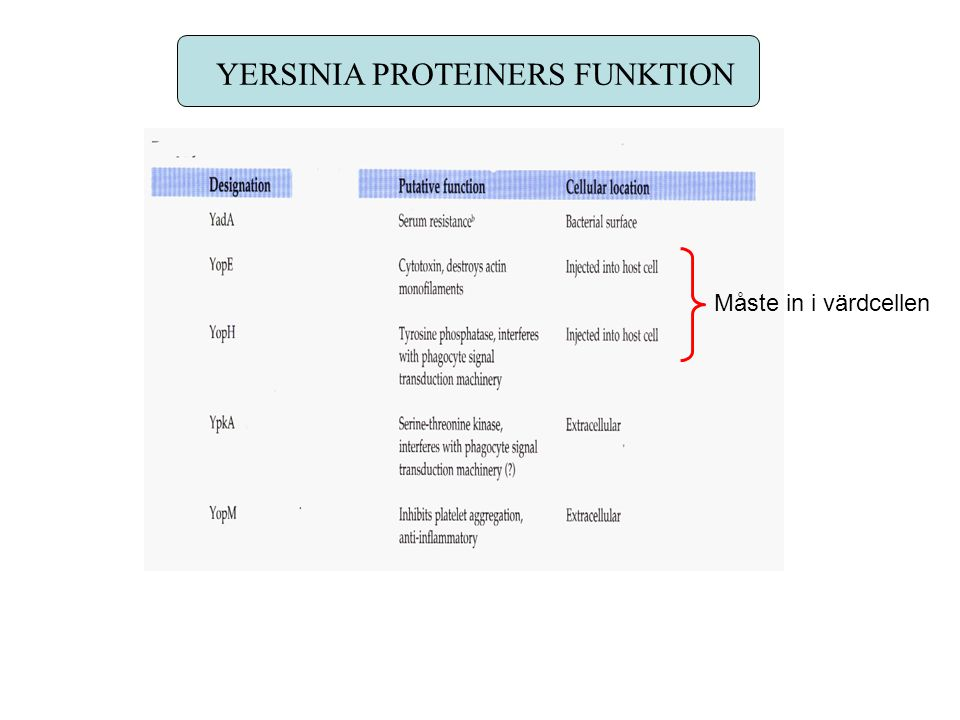 YERSINIA PROTEINERS FUNKTION