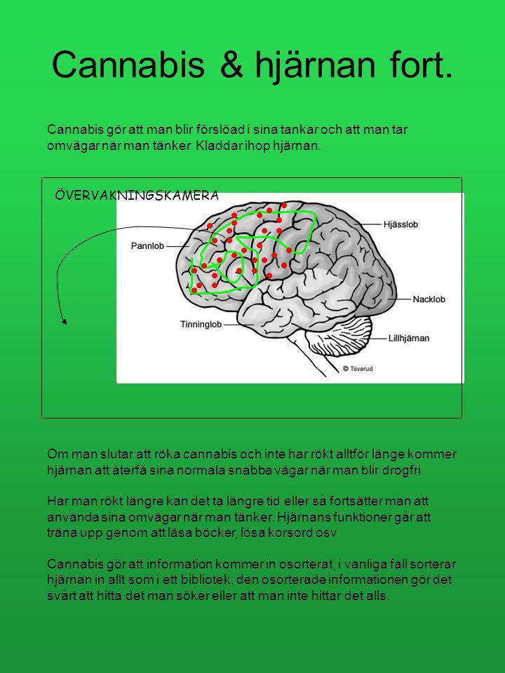 Cannabis & hjärnan fort.