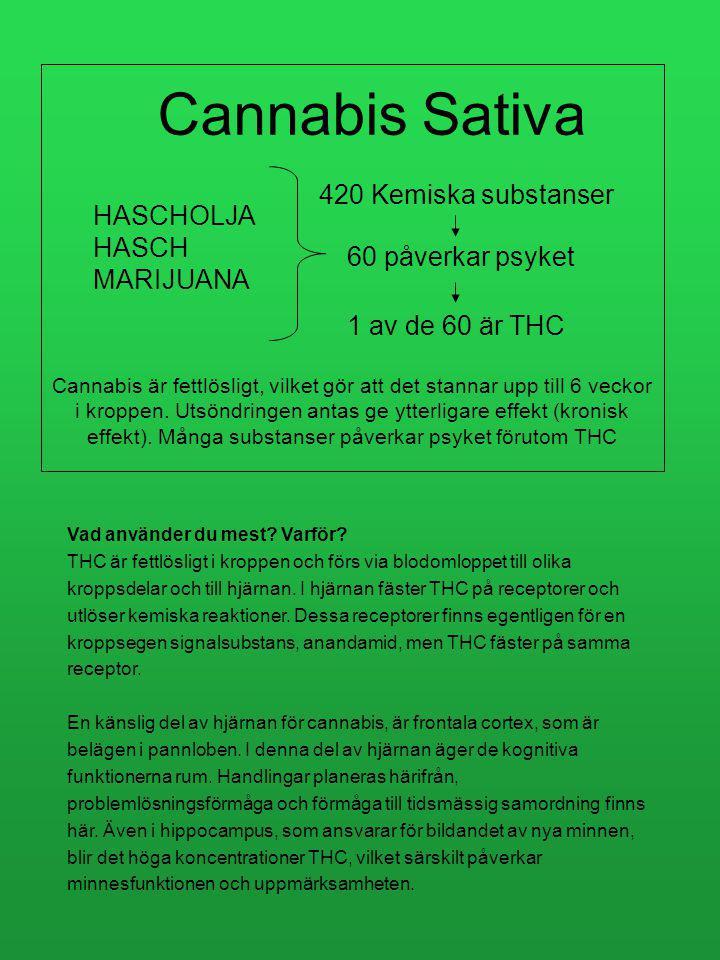 Cannabis Sativa 420 Kemiska substanser HASCHOLJA HASCH MARIJUANA