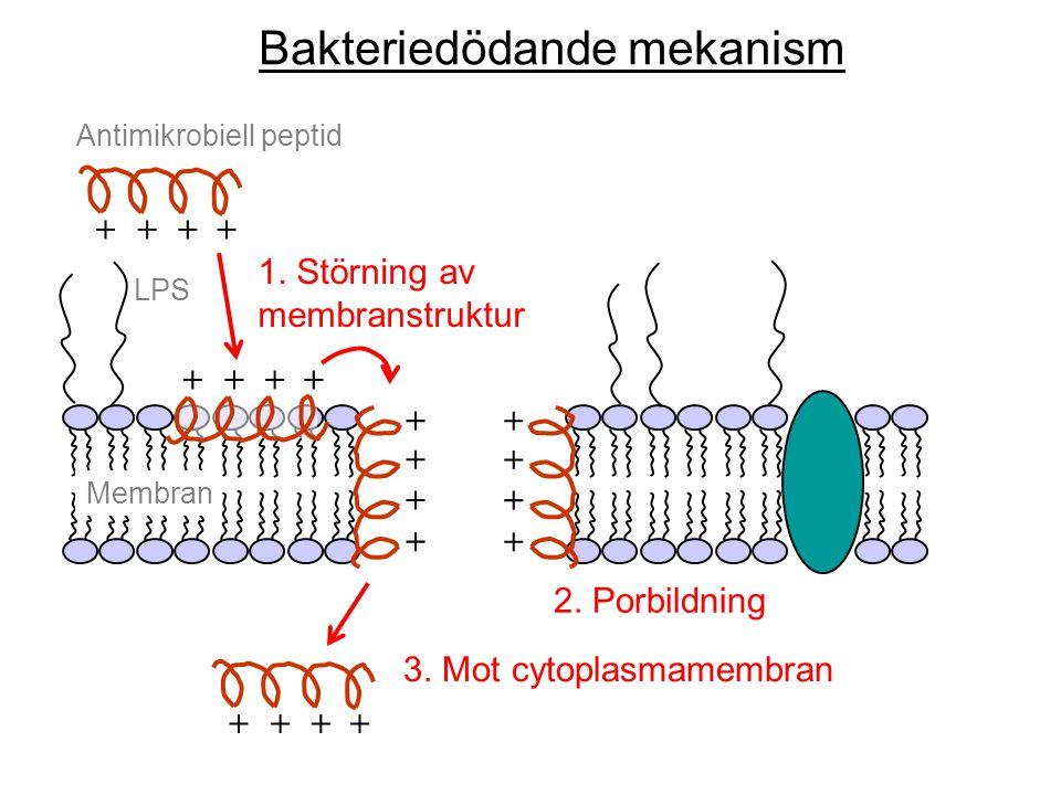 Bakteriedödande mekanism