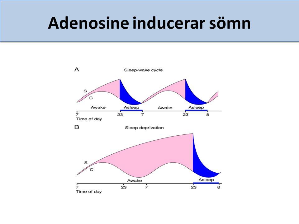 Adenosine inducerar sömn