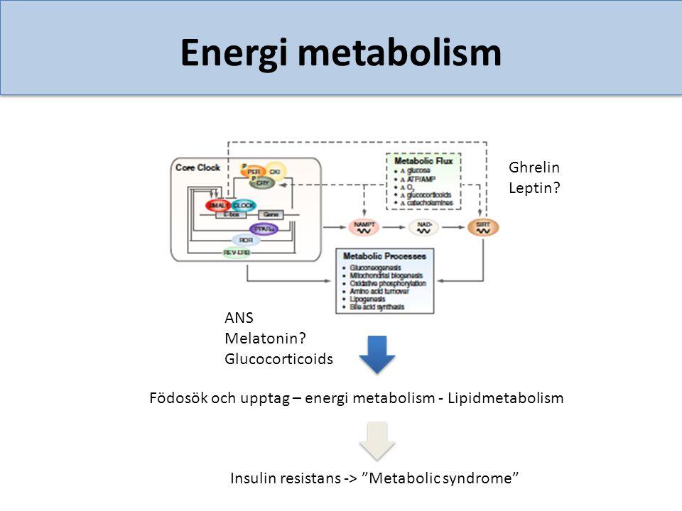 Energi metabolism Ghrelin Leptin ANS Melatonin Glucocorticoids