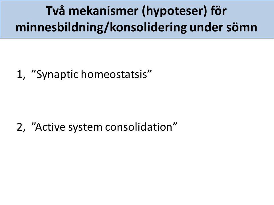 Två mekanismer (hypoteser) för minnesbildning/konsolidering under sömn