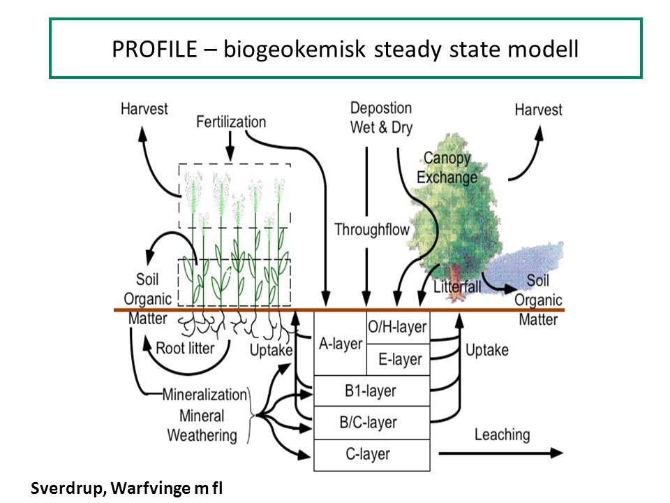 PROFILE – biogeokemisk steady state modell