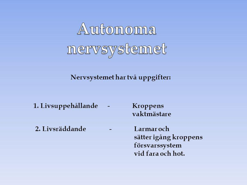Autonoma nervsystemet Nervsystemet har två uppgifter: