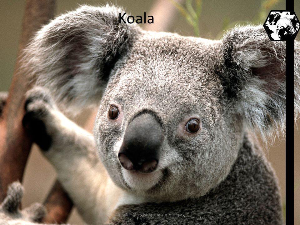 Koala jon.wide@logistikprogrammet.prg