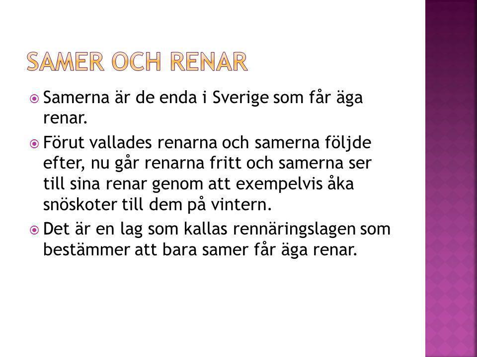 Samer och renar Samerna är de enda i Sverige som får äga renar.