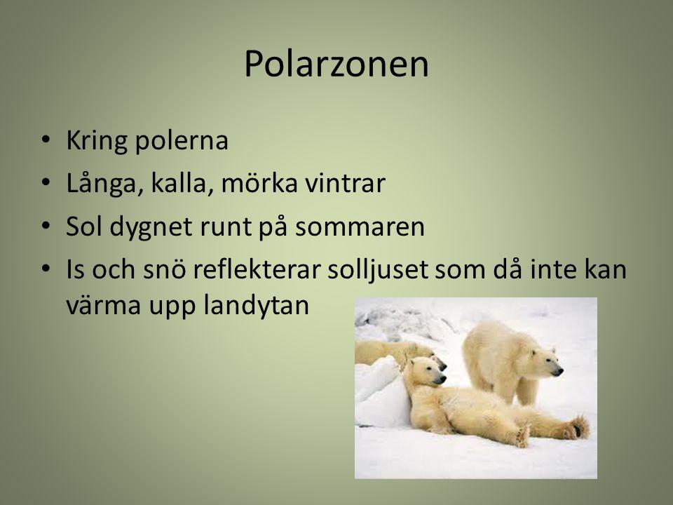 Polarzonen Kring polerna Långa, kalla, mörka vintrar