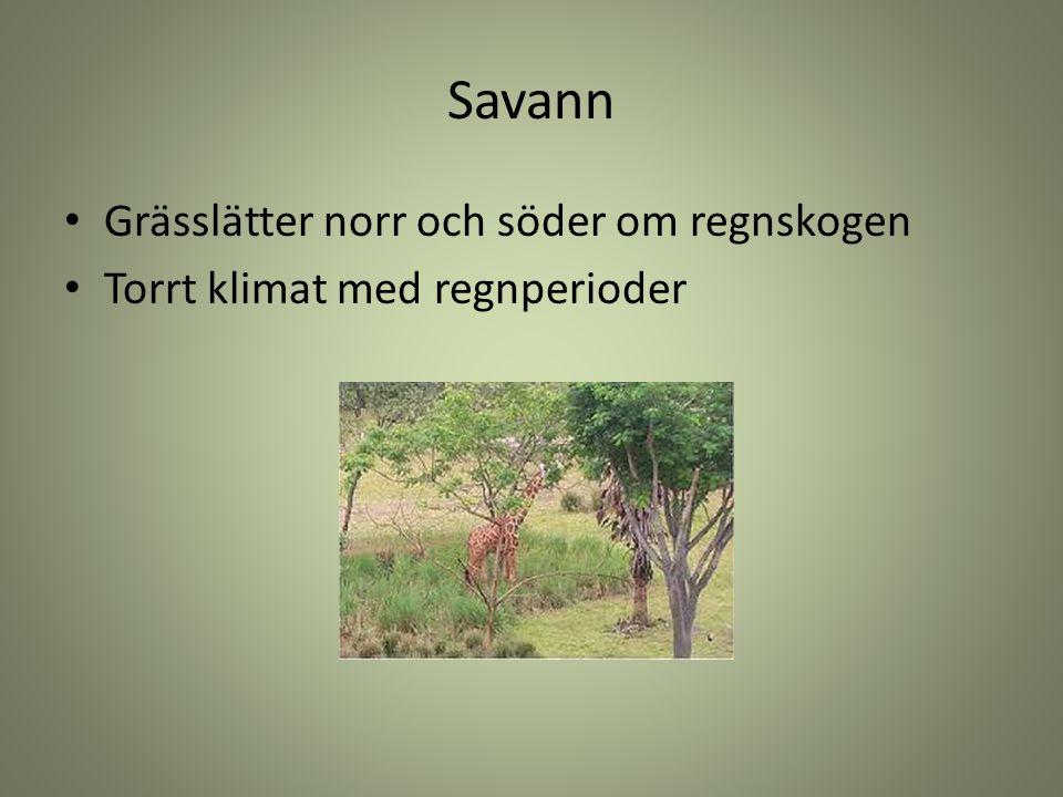 Savann Grässlätter norr och söder om regnskogen