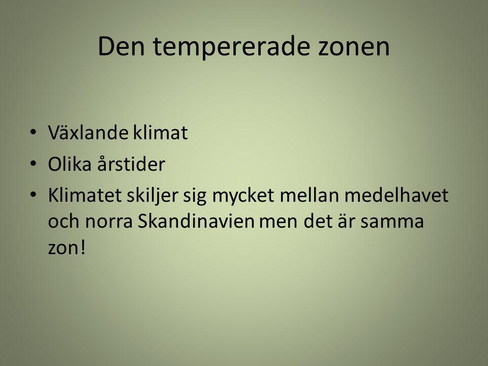 Den tempererade zonen Växlande klimat Olika årstider