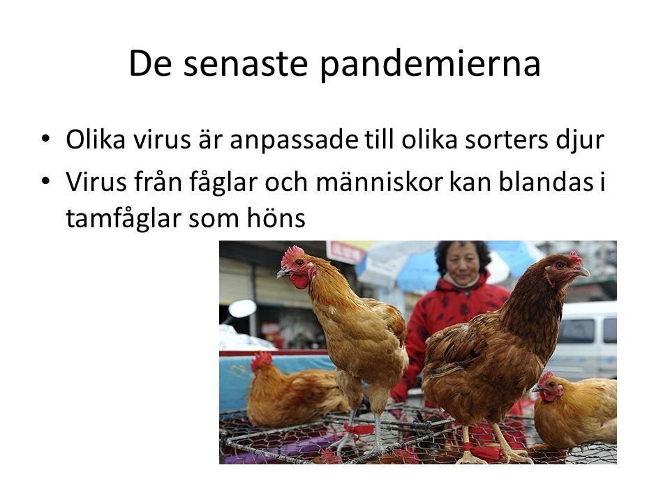 De senaste pandemierna