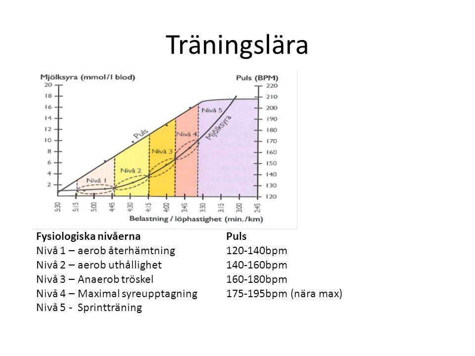 Träningslära Fysiologiska nivåerna Puls