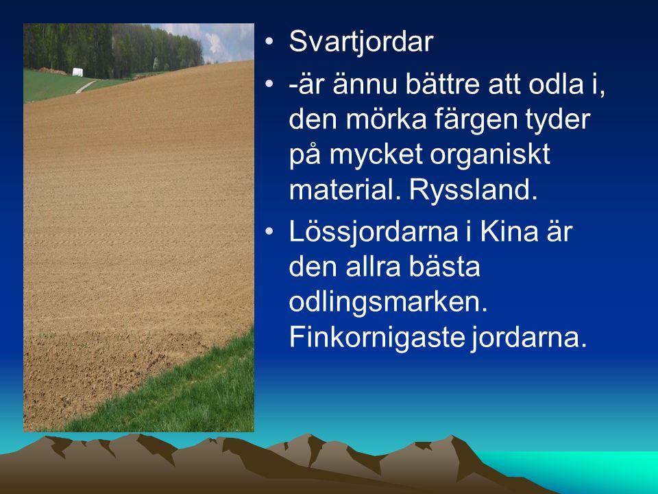 Svartjordar -är ännu bättre att odla i, den mörka färgen tyder på mycket organiskt material. Ryssland.