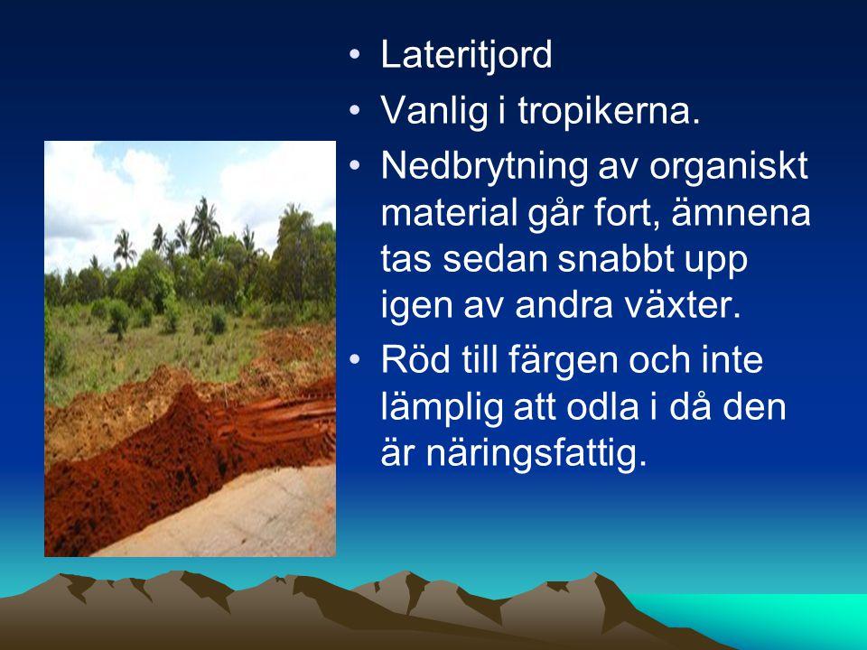 Lateritjord Vanlig i tropikerna. Nedbrytning av organiskt material går fort, ämnena tas sedan snabbt upp igen av andra växter.