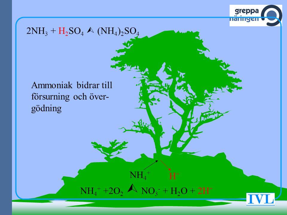 2NH3 + H2SO4  (NH4)2SO4 Ammoniak bidrar till försurning och över-gödning.