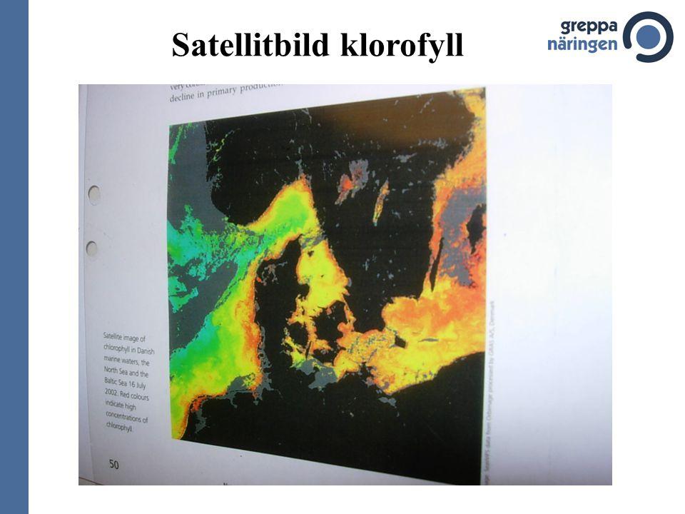 Satellitbild klorofyll