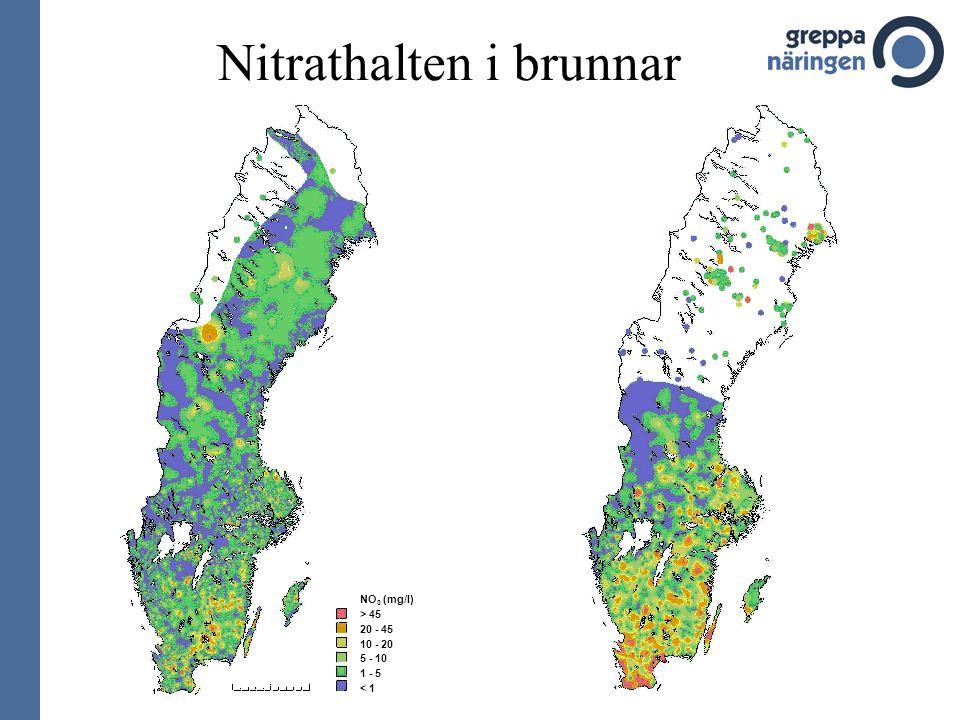 Nitrathalten i brunnar