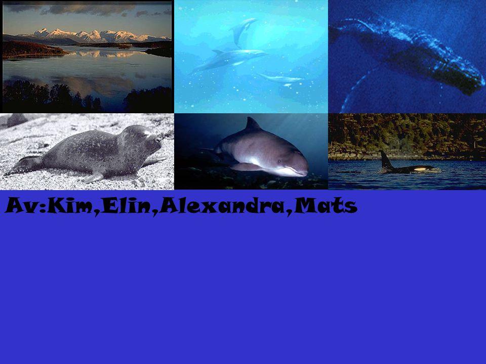 Av:Kim,Elin,Alexandra,Mats