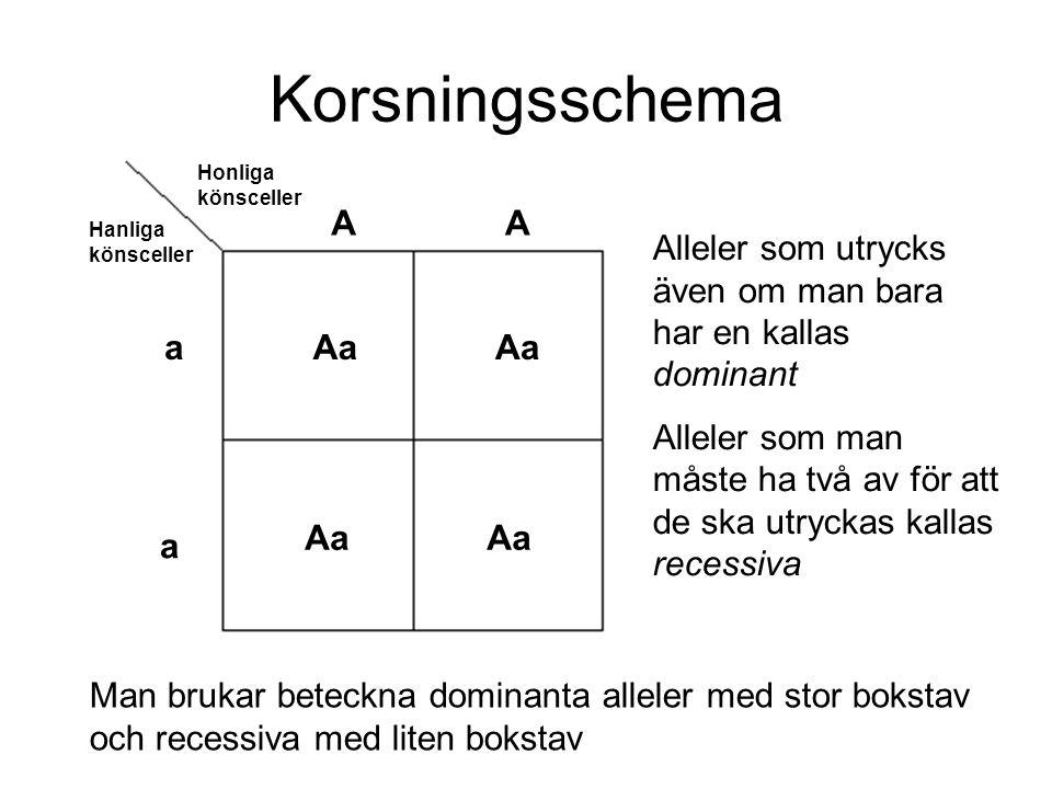 Korsningsschema Honliga könsceller. A. A. Hanliga könsceller. Alleler som utrycks även om man bara har en kallas dominant.
