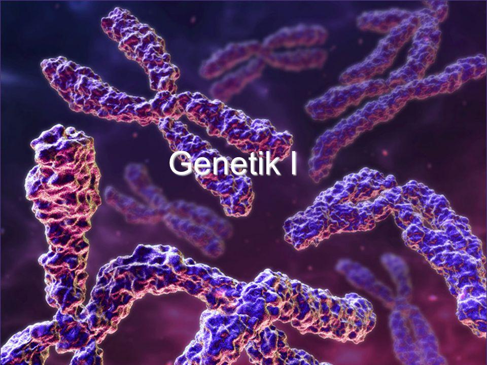 Genetik I