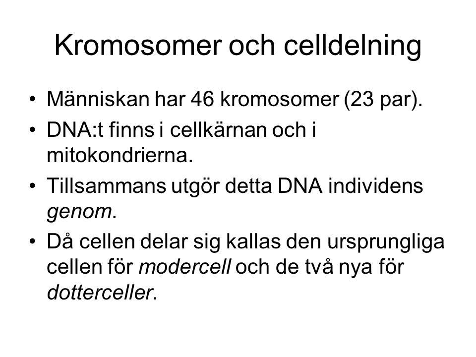 Kromosomer och celldelning
