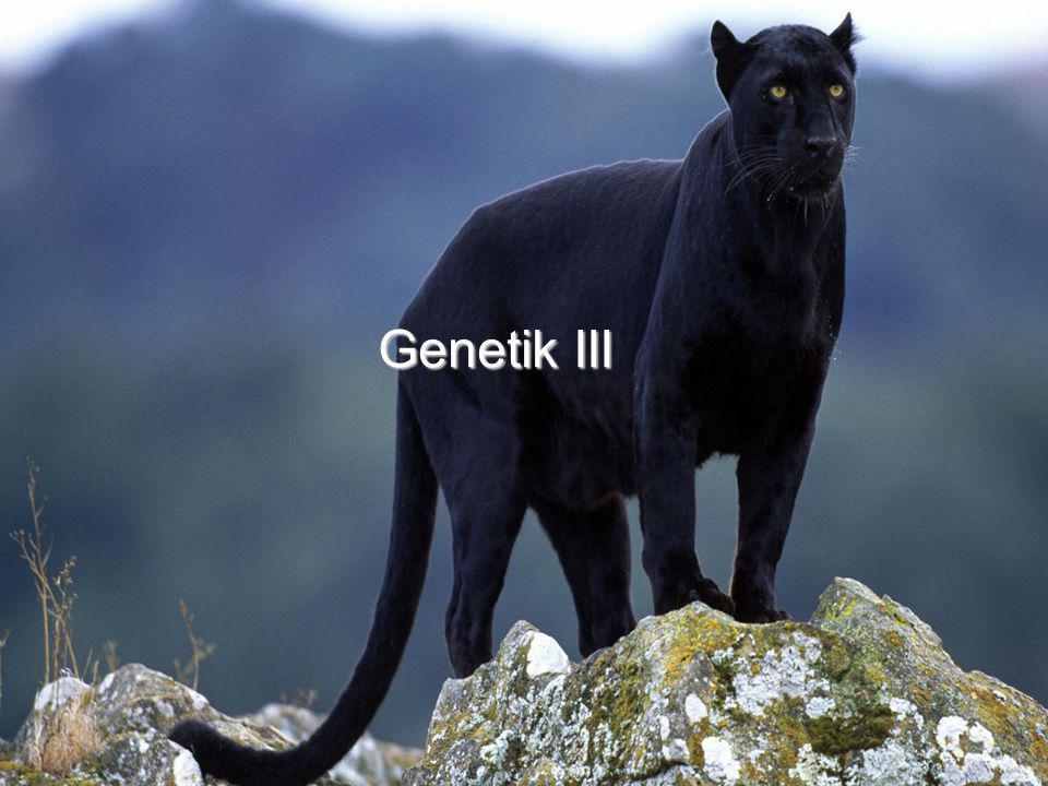 Genetik III