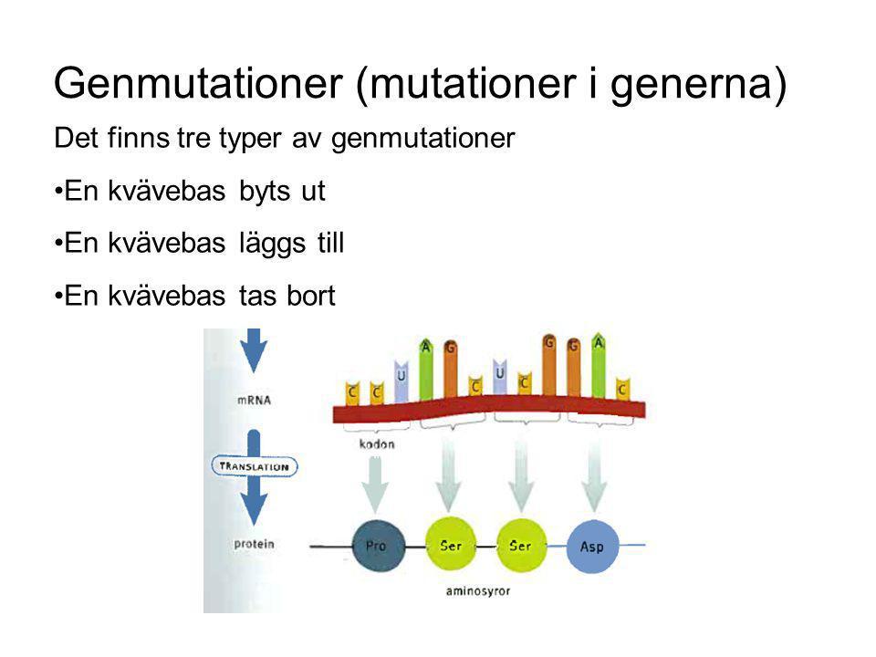 Genmutationer (mutationer i generna)