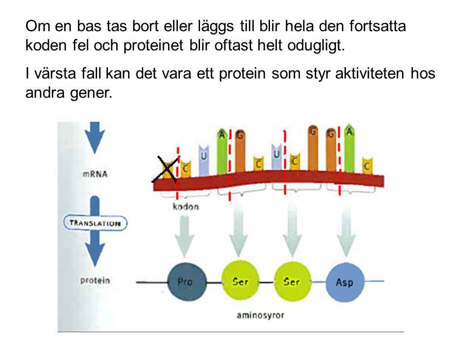 Om en bas tas bort eller läggs till blir hela den fortsatta koden fel och proteinet blir oftast helt odugligt.