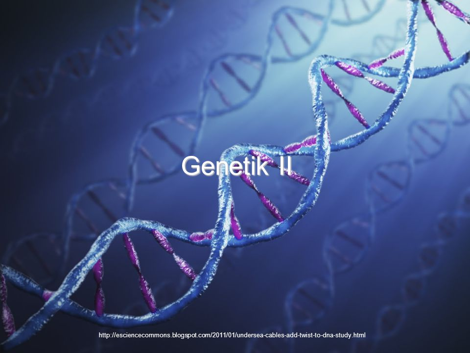 Genetik II http://esciencecommons.blogspot.com/2011/01/undersea-cables-add-twist-to-dna-study.html