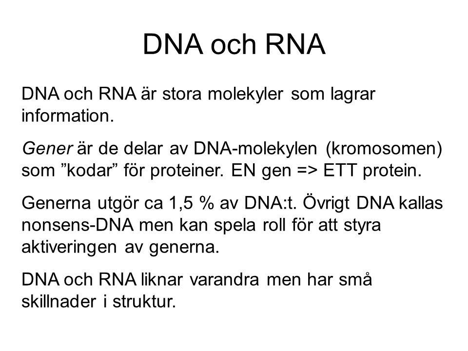 DNA och RNA DNA och RNA är stora molekyler som lagrar information.