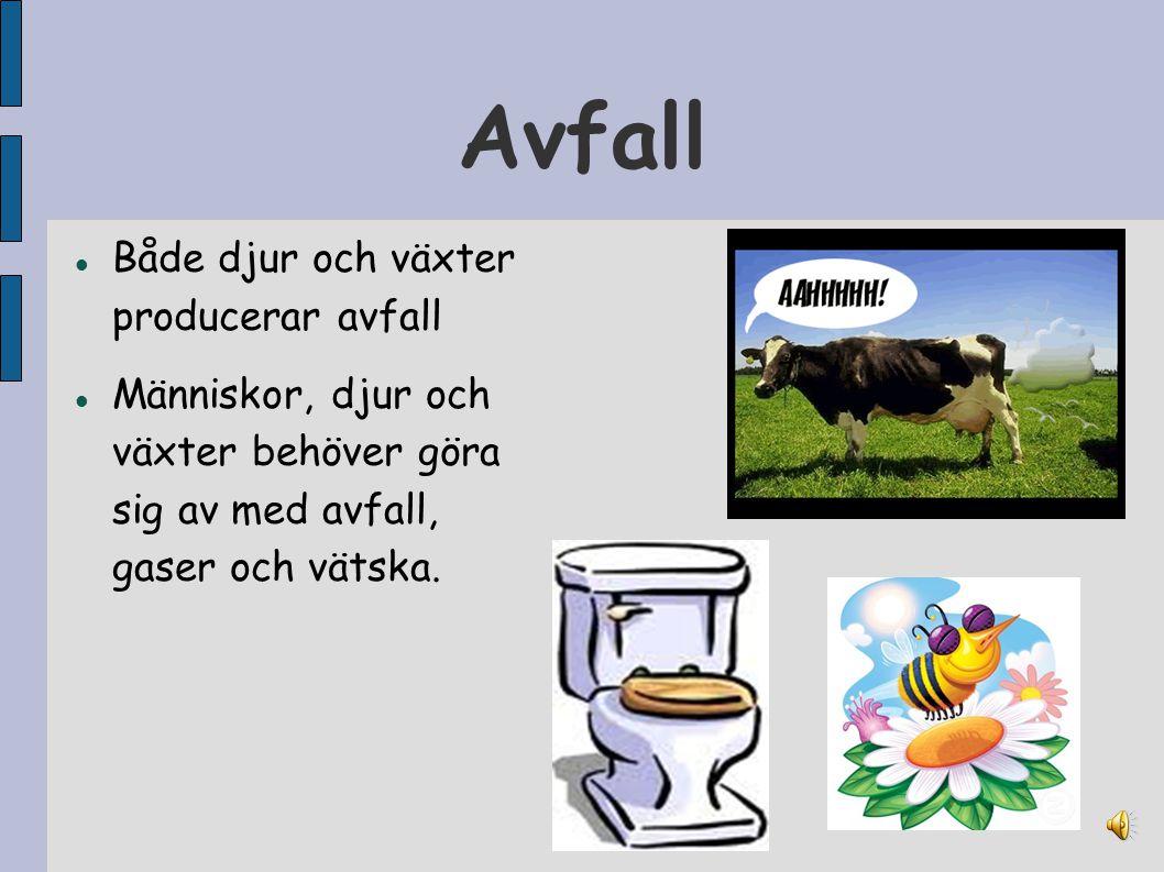 Avfall Både djur och växter producerar avfall