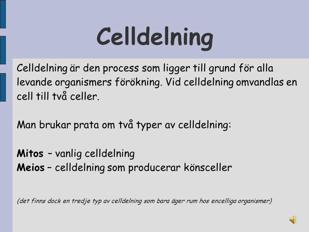 Celldelning Celldelning är den process som ligger till grund för alla