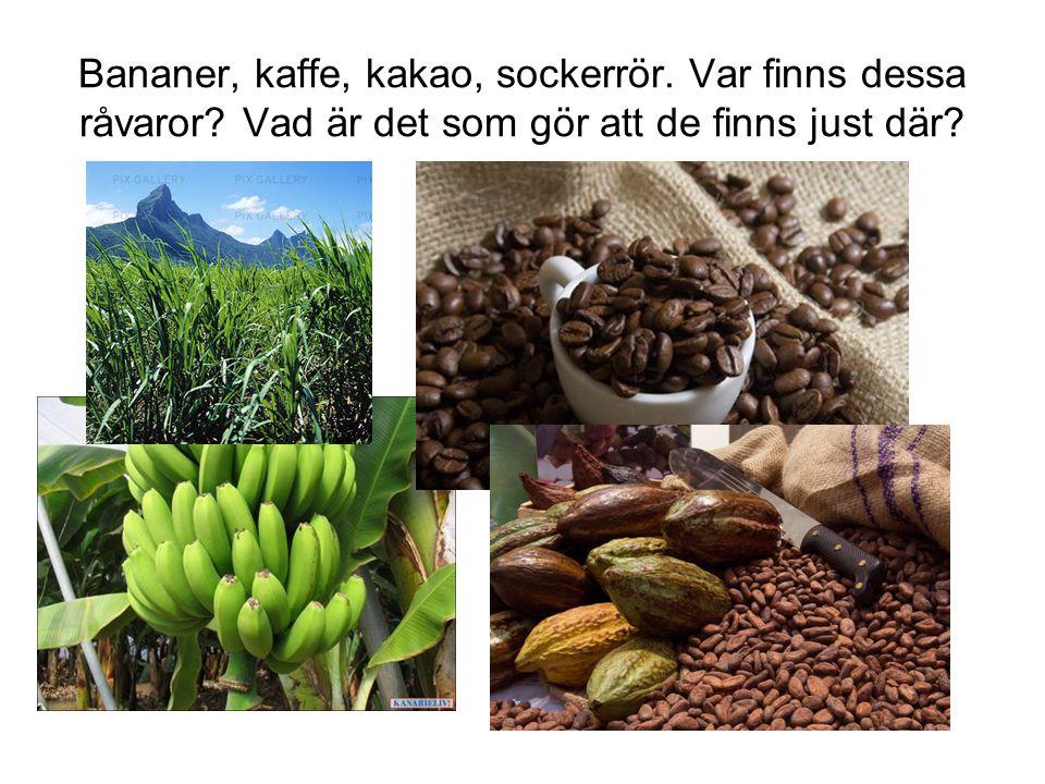 Bananer, kaffe, kakao, sockerrör. Var finns dessa råvaror