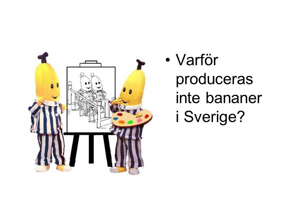 Varför produceras inte bananer i Sverige