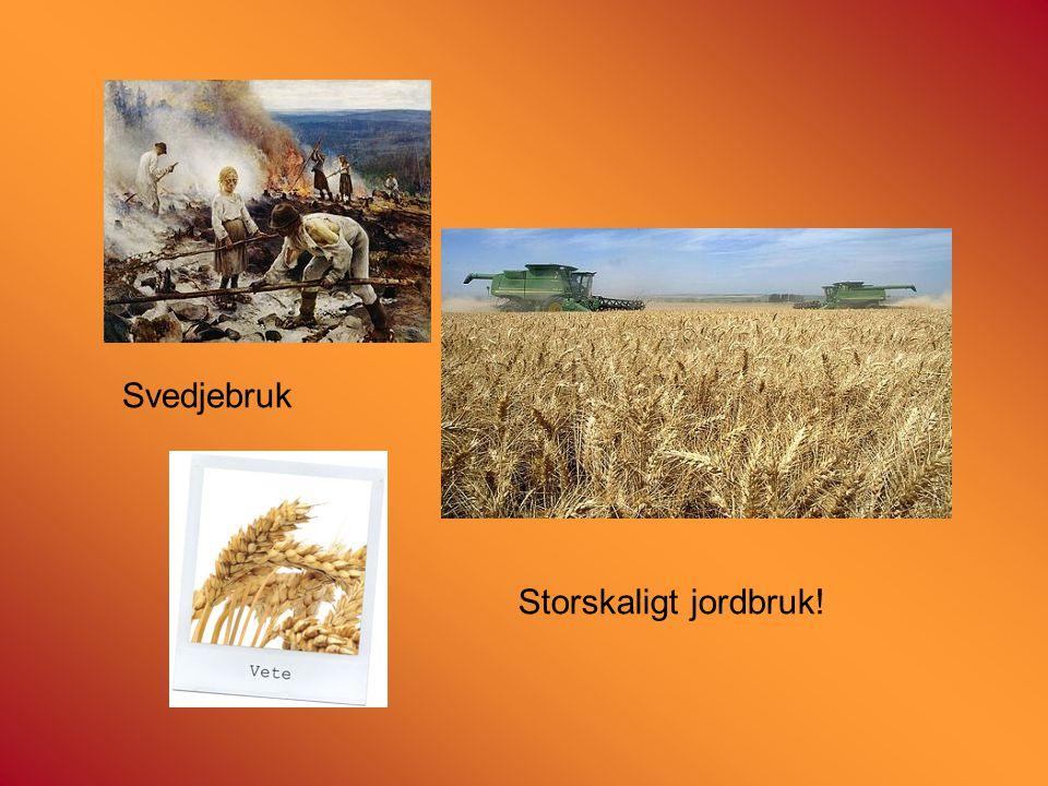 Svedjebruk Storskaligt jordbruk!