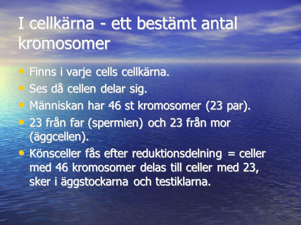 I cellkärna - ett bestämt antal kromosomer