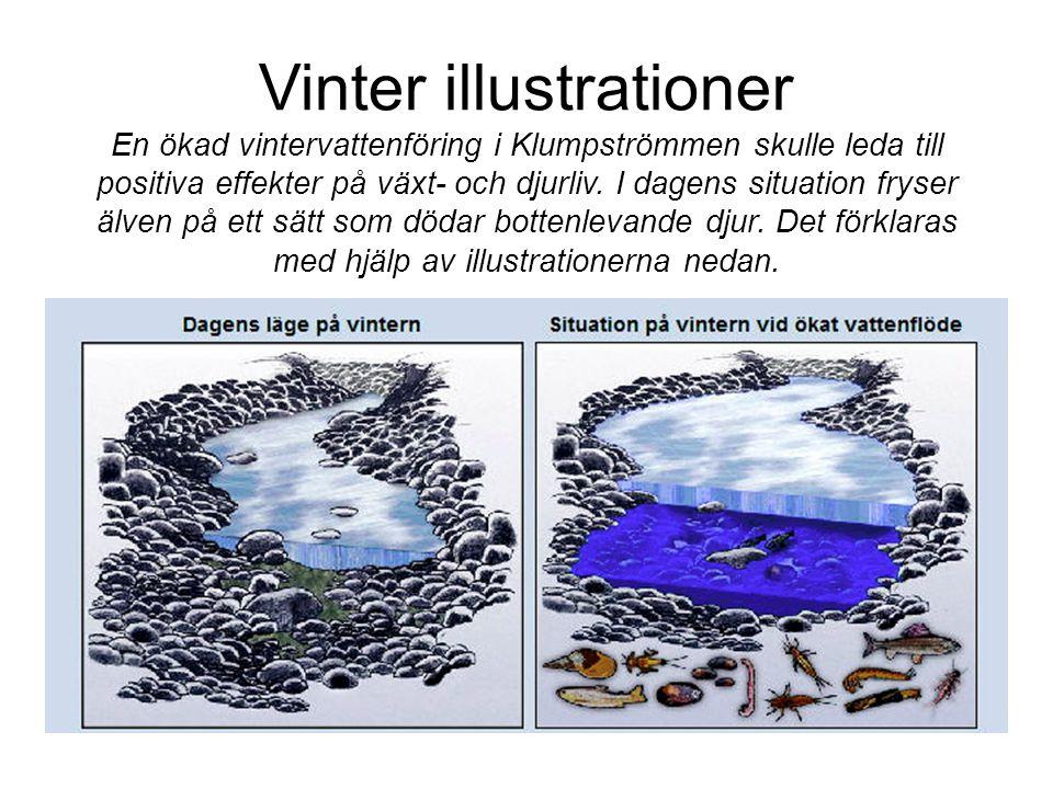 Vinter illustrationer En ökad vintervattenföring i Klumpströmmen skulle leda till positiva effekter på växt- och djurliv.