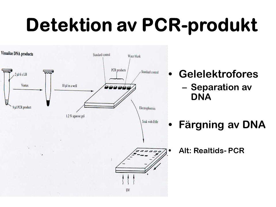Detektion av PCR-produkt