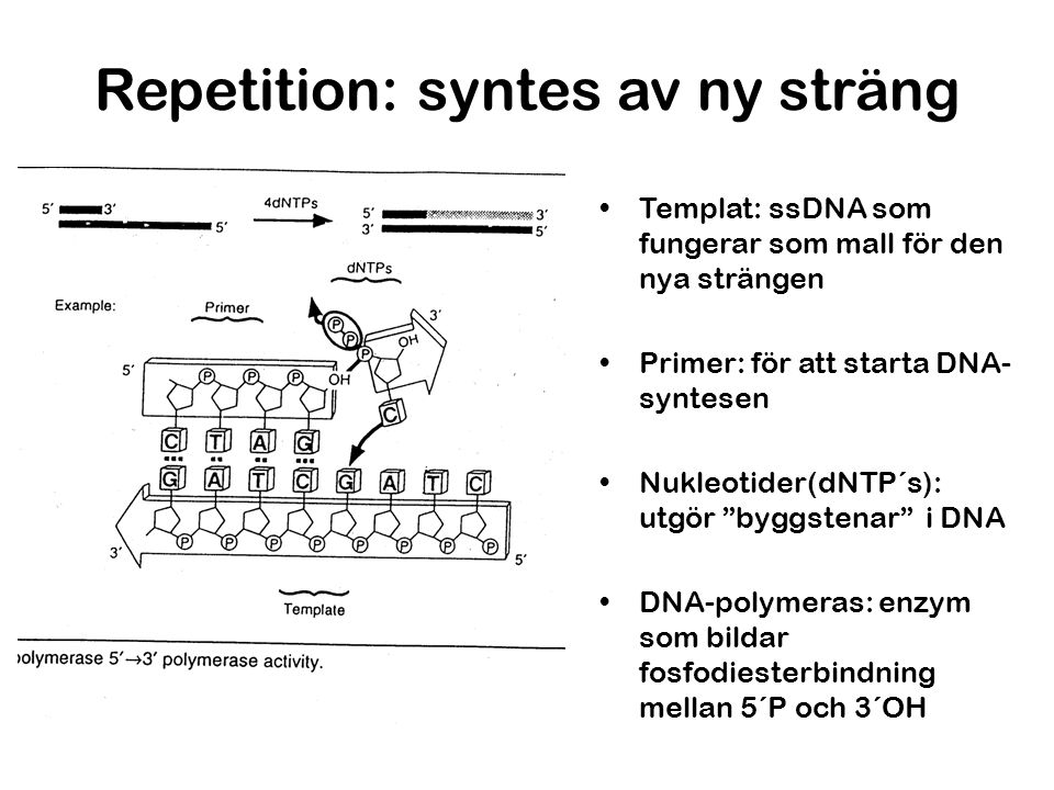 Repetition: syntes av ny sträng