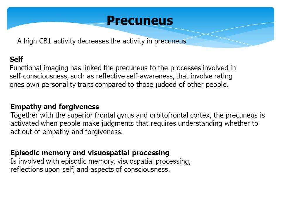Precuneus A high CB1 activity decreases the activity in precuneus Self