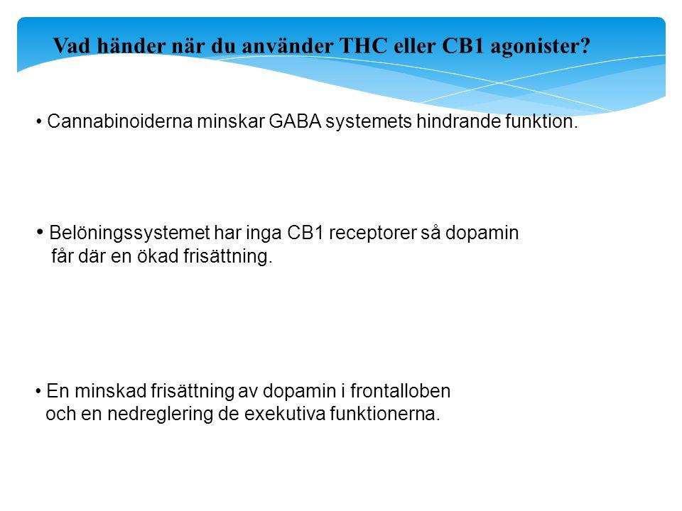 Vad händer när du använder THC eller CB1 agonister