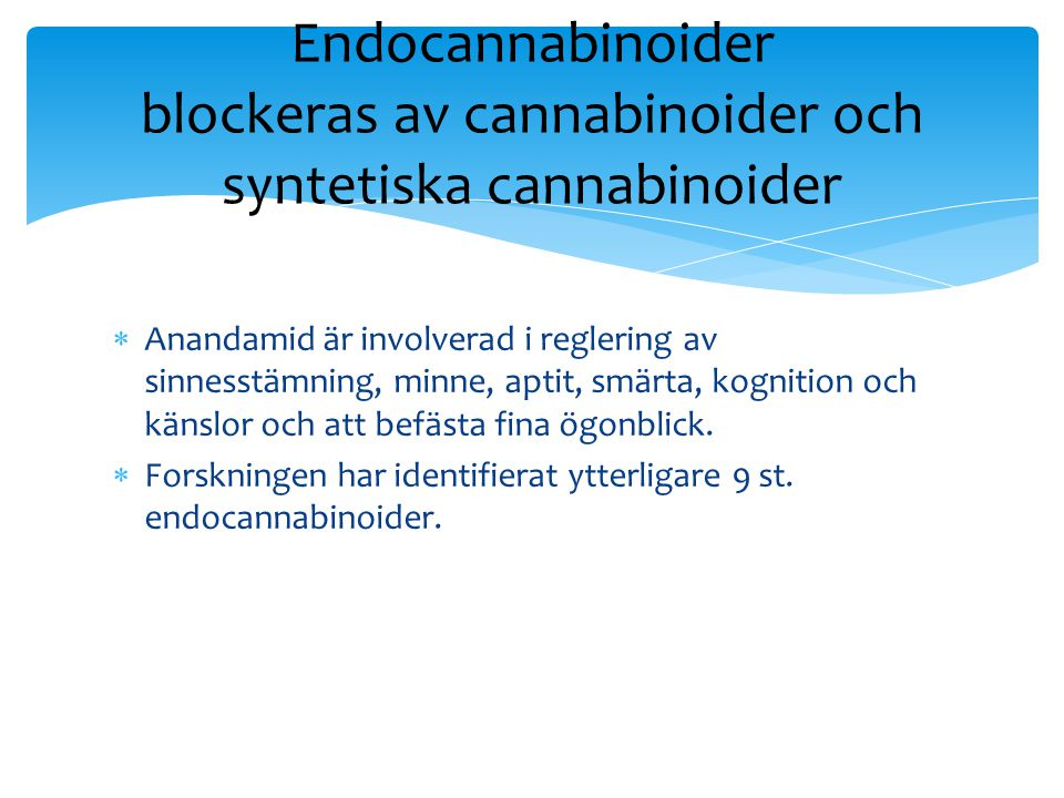 Endocannabinoider blockeras av cannabinoider och syntetiska cannabinoider