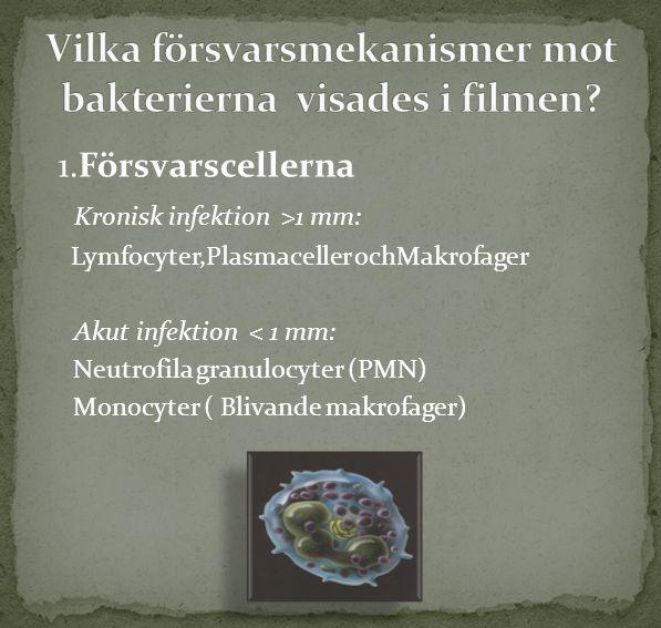 Vilka försvarsmekanismer mot bakterierna visades i filmen