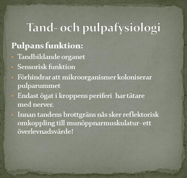 Tand- och pulpafysiologi