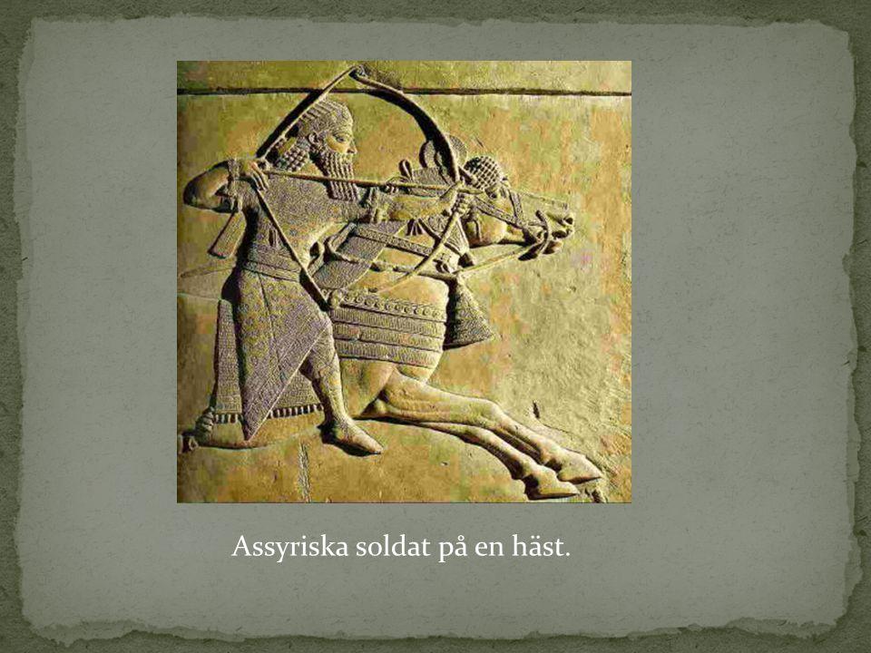 Assyriska soldat på en häst.