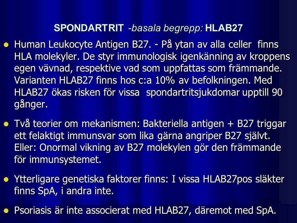 SPONDARTRIT -basala begrepp: HLAB27