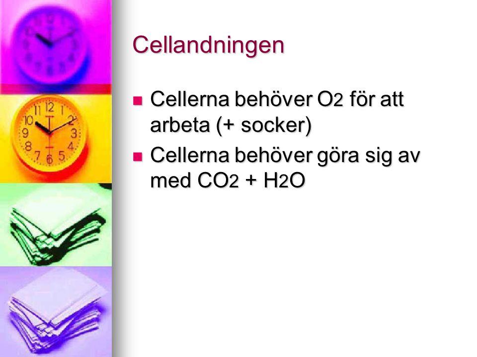 Cellandningen Cellerna behöver O2 för att arbeta (+ socker)
