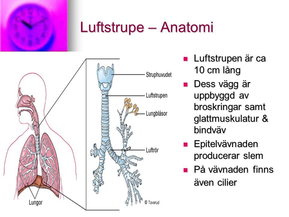 Luftstrupe – Anatomi Luftstrupen är ca 10 cm lång