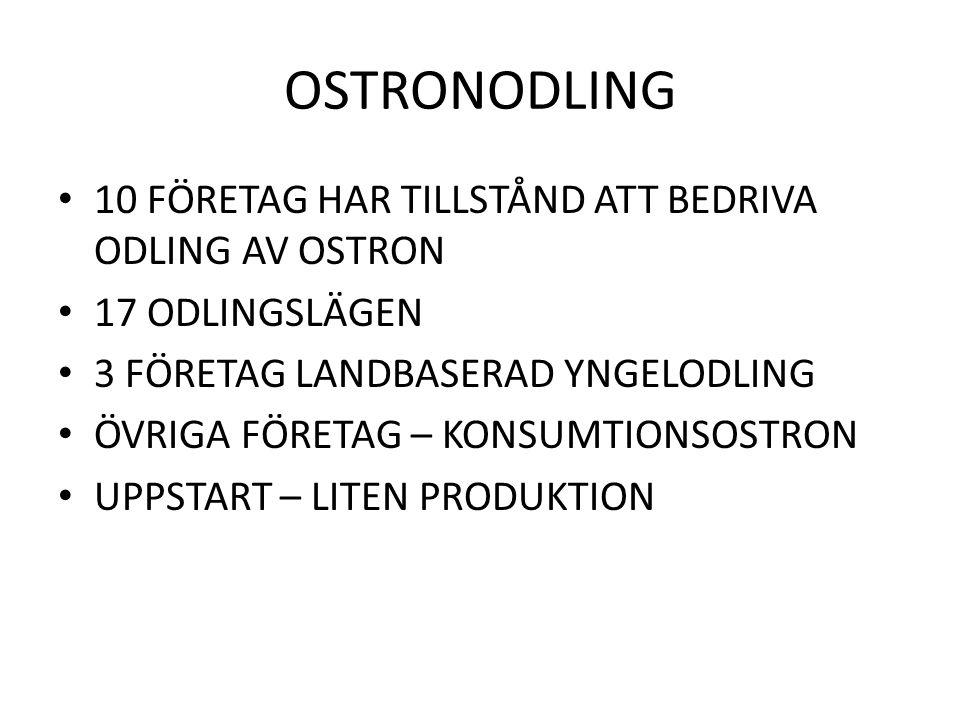OSTRONODLING 10 FÖRETAG HAR TILLSTÅND ATT BEDRIVA ODLING AV OSTRON