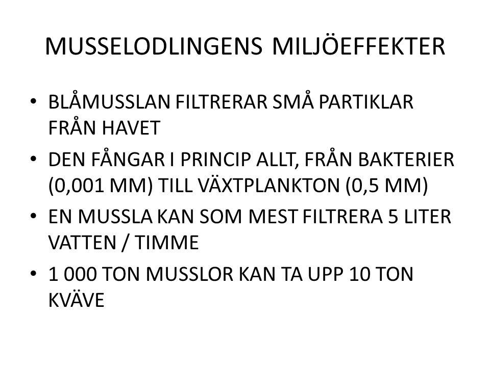 MUSSELODLINGENS MILJÖEFFEKTER